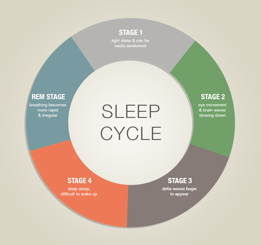 Astounding Learn How To Sleep Better By Understanding Sleep Cycles Stages Letkol Mohammedshrine Wiring Cloud Letkolmohammedshrineorg