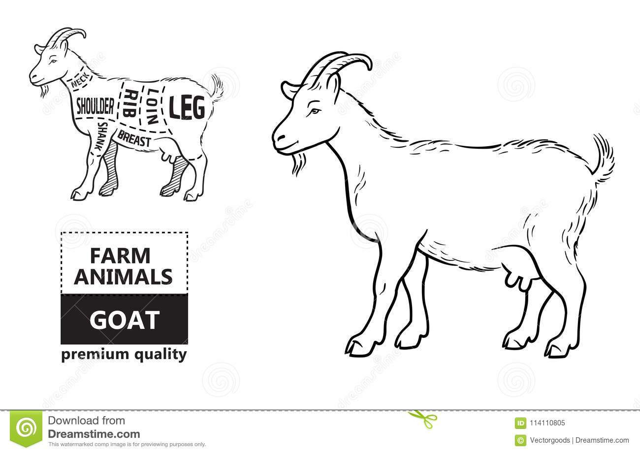Magnificent Vector Illustration Goat Cuts Diagram Or Chart Goat Black Letkol Mohammedshrine Wiring Cloud Letkolmohammedshrineorg