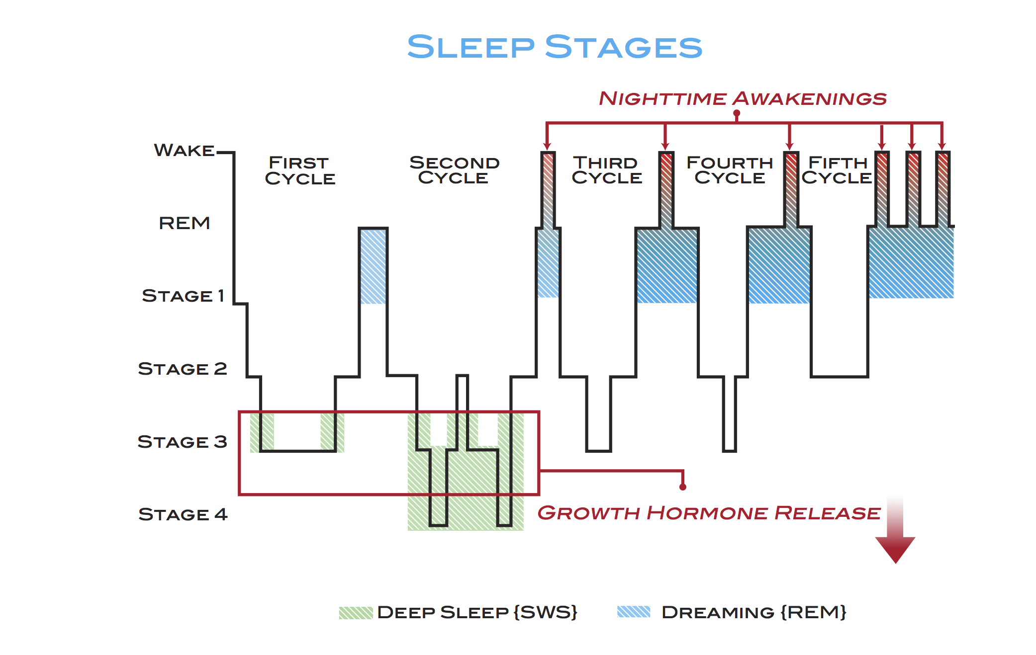 Sensational Stages Of Sleep What To Know About Non Rem And Rem Sleep Cycles Letkol Mohammedshrine Wiring Cloud Letkolmohammedshrineorg